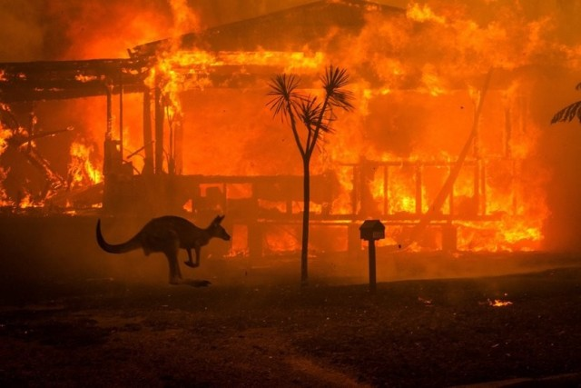 Gamers are Raising Funds to Help Battle Australian Bush Fires